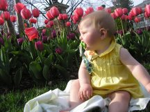 In the tulips at Marriott Wardman Park, Washington, D.C.