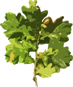 Oak leaves and acorns (stylized)