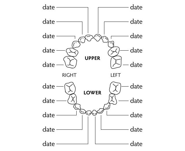 ToothTracker (image of Adobe Illustrator version)